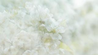 Spring Daydream