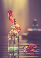 The last tulip (Ro Cafe) Tags: stilllife tulip flower petals bottle books lowkey softlight colorful dark setup nikkormicro105f28 nikond600