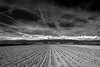Champ de patates (Olivier Rapin) Tags: 2870mm sonyalpha7 champ field patate suisse romandie bw nb black white