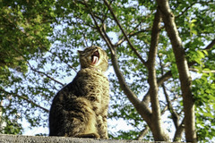 enoshima island cat (higehiro) Tags: cat goodmorning morningcat xt2 enoshimaisland japan