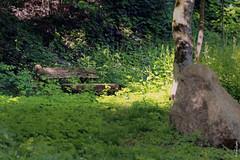 l'oublié (FranSight) Tags: fransight france fran flickr facebook photo picture canon 100mm28iis macrophoto proxymacro volant papillon ailes zoom eos70d 70d 2018 be back retour printemps spring insect fleurs flower vert green rouge red mauve violet nature eau water long pose freeze time mousse clouange metz moselle entre deux sapinière tree arbre orange chaleur feuilles seche jaune yellow forest wood intimité banc repos
