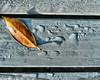 When I wake up in the morning light (explored) (CJS*64) Tags: cjs64 cjs craigsunter panasoniclx100 panasonic lx100 flora flowers leaves rain raindrops colour colours garden