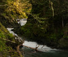 early (wintercove) Tags: spring growth forest stream water leaf tree alaska