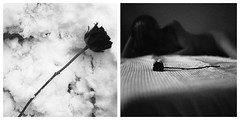 Roses in the snow (l'imagerie poétique) Tags: annesilver poeticimagery limageriepoétique filmisnotdead 35mmfilm 120film diptych roses blackandwhitefilm bronicasqa pentaxmesuper kodaktax400 ilforddelta100