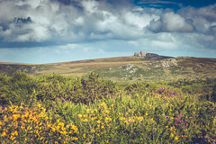 Splashing colours on the moor (The Frustrated Photog (Anthony) ADPphotography) Tags: category dartmoor devon england landscape places travel canon1585mm haytor canon70d canon heather gauze moor moors rocks sky cloudysky travelphotography landscapephotography grass outdoor natural nature countryside rural