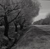 Route rurale! (Argentique) / Country road... (Film) (Pentax_clic) Tags: • tx warren 11 solinar ventura trix 66 2018 deluxe 400 d76 quebec printemps ruisseau robert nb mai bw argentique agfa harwood vaudreuil