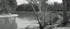 Old Man Murray (OzzRod) Tags: sony a7rii sonyzeissfe55mmf18 murray river meander channel pointbar undercutbank panorama blackandwhite monochrome shadesofgrey dailyinmay2018