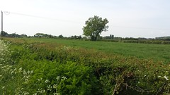 Long Forest - Commonwood, Holt - Year 2 Hedge Survey - 18-5-18 (31) (Keep Wales Tidy) Tags: end year 1 site assessment iselecting hedgerows for 2