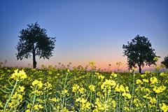 Bring it on home to me... (Tobi_2008) Tags: frühling spring bäume trees landschaft landscape natur nature himmel sky sonnenaufgang sunrise sachsen saxony deutschland germany allemagne germania