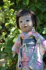 Suzume's sunny day (shero6820) Tags: old vintage antique toy doll ichimatsu ningyo taisho earlyshowa japan gofun kimono