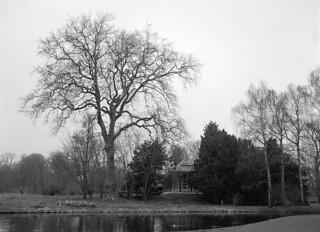 Frederiksberg Have: Kineserøen