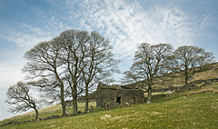 Roach End Barn Sheep (Andrew 3457) Tags: 2018 uk staffordshire peakdistrict canon24104mmf4isusm landscape canon5dsr tree trees old barn roaches roach end