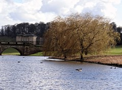 [NT] Kedleston Hall. Country Park. Lake-View. March 2018 (Simon W. Photography) Tags: kedlestonhall kedlestonhallcountrypark lake cutlerbrook kedlestonpark nationaltrust nationaltrustuk kedleston derbyshire landscape landscapephotography unitedkingdom uk england english greatbritain gb britain british eastmidlands countryside outdoor outdoors outside ambervalley