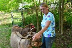 Dragon Fly Farm Donkeys 20180502 20180501  DSC_3062 Deborah Happy Birthday (Shane's Flying Disc Show) Tags: donkeys catdragonflyfarm