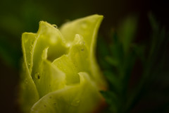 Gartenmakro (Alfred Bold / Neubruch Photography / Moosburg GANZ) Tags: gartenmakro makro sony sonya7 sonyalpha sonygoss goss 90mm macro macrophotography fotografie spas hobby floral flower