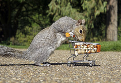 Did I Remember Everything (Skyline:)) Tags: squirrel lol humour shopping cart wildlife nature humor animal funny 7dwf