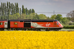 """43318 """"40 years of the Inter-City 125"""" (deltic17) Tags: 1s11 hst 40yearsof125 decalls intercity125 125 yellow rapefield countryside panned virgin virgintrains vtec virgintrainseastcoast eastcoast eastcoastmainline ecml diesel heritagediesel class43 canon canon5dmk3"""