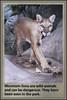 Warning Sign (Runemaker) Tags: mountainlion cougar puma zion nationalpark wilderness westrim trail hiking backpacking nature sign warning danger wildlife