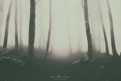 Paths of Solitude (Alternate take) (Mimadeo) Tags: fog forest path mood moody atmosphere atmospheric monochrome landscape magic dreamy tree trees bright light nature mystery mist spooky foggy misty woods creepy fantasy mysterious surreal silhouette silhouettes enchanted lost retro vintage toned filter effect cold solitude season seasonal winter autumn sunlight