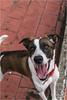 Delta (Lucio_Vecchio) Tags: nikon d5500 delta perros dogs mascotas amigos friends retrato juego argentina