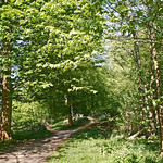 Woodland in spring thumbnail