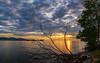 Toter Baum (Oliver Noggler) Tags: bodensee fusach wasser vorarlberg sonnenuntergang wolkenstimmung