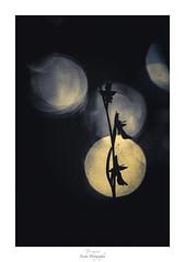 Au clair de lune (Naska Photographie) Tags: naska photographie photo photographe paysage proxi proxiphoto macro macrophotographie macrophoto minimaliste minimalisme monochrome ophrys mouche orchidée sauvage nature extérieur color couleur bokeh flare art artistique artist poésie poétique silhouette ombre chinoise chinoiserie lune moon fleur flower