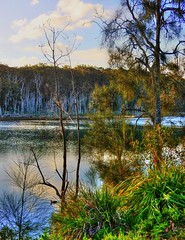 Tranquility by the lake XII (elphweb) Tags: hdr highdynamicrange nsw australia tree trees forest bush woods wood