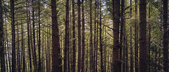 Forest (Graham Gibson) Tags: sony a7rii samyang 35mm f28 af fe lens plants nature green spring