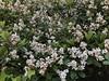 blossom (Hideki Iba) Tags: japan iphone iphone8