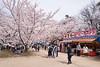 弘前公園 (かがみ~) Tags: aomori sakura leicaq hirosaki leica japan typ116 さくら 弘前 日本 青森 hirosakishi aomoriken jp