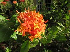 Bonaire 2018 (Valerie Hukalo) Tags: bonaire buddydiveresort antilles caraïbes resort jardin island île paysbas hukalo valériehukalo