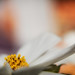 lijnenspel met bloemen