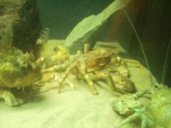 Hanging out at the aquarium (Collywood) Tags: trip les illes