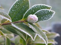 frost hepburn springs