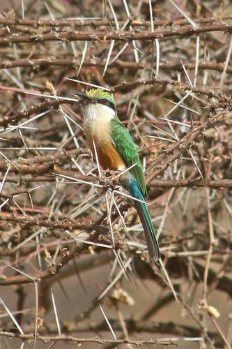 Kenya 2006_0421