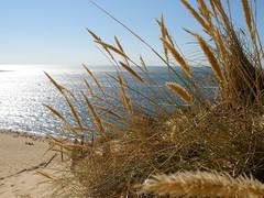 ~~ Dune de Pyla ~~ (Jerry ) Tags: ocean summer sun france beach water sand quality bordeaux coolest pyla gironde abigfave p1f1