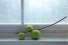 (hd connelly) Tags: stilllife food window fruit hdconnelly three interestingness explore rainy llc quince fv interestingness76