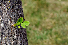 Growth by Sharon Mollerus, on Flickr