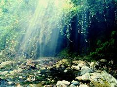 [フリー画像] [自然風景] [森林/山林] [太陽光線] [トルコ風景]       [フリー素材]
