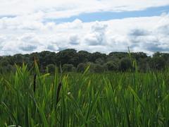 marsh (jessamyn) Tags: trees sky grass coast main wells hike wellsmaine wellsme wellsreserve
