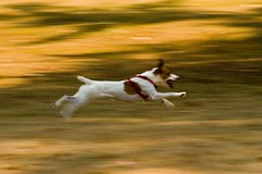 Flying Dog (Airchinapilot) Tags: test dog motion is imagestabilized canonef70300isusm