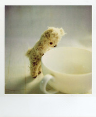 bear (+yooco+) Tags: bear stuffedtoy white cup animal toy polaroid sx70 stuffed teddy handmade bears craft plush teddybear stuffedanimal handsewn etsy artistbear