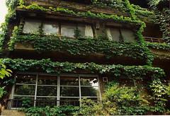 aoyama1 (gracias!) Tags: green film japan architecture tokyo pentax ivy aoyama omotesando mz5 表参道 dojunkaiapartment 同潤会青山アパート