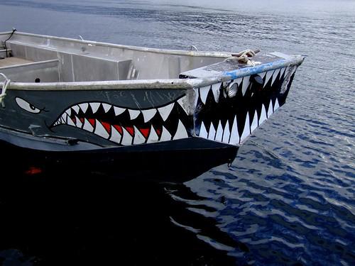 shark boat BLOG TITLE