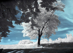 ic25 (AB-) Tags: trees tree ir surreal infrared novisad nikon5700 vojvodina tvrdjava