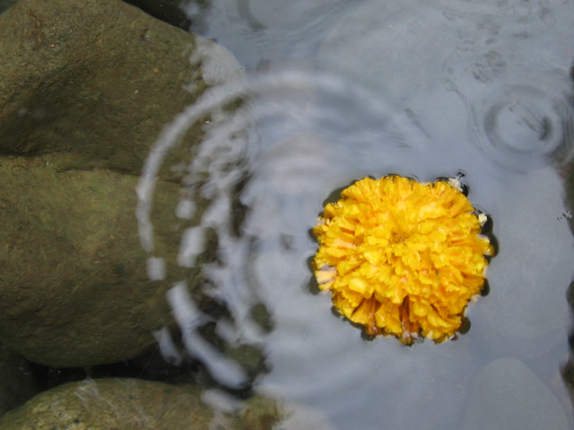 marigold, tanner springs