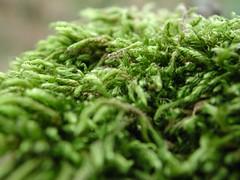 I haven't done my hair yet ! (Feelings2006) Tags: wood summer green nature hair moss vert fresh foret frais bois ete mousse fraicheur