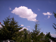 clouds and pines (Argelia Castaeda) Tags: blue naturaleza white verde green blanco nature azul clouds panoramic pines nubes pinos panormica