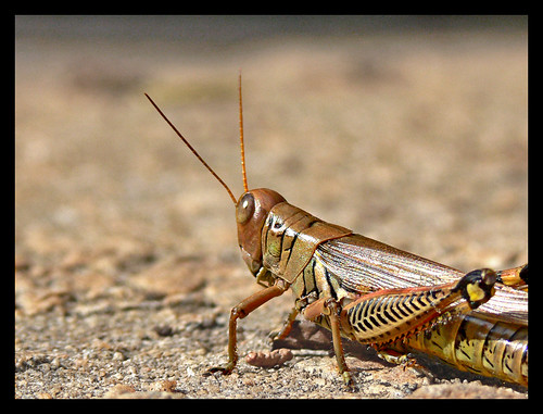 Grasshopper by Alan Jordan